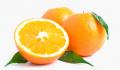Orange - Citrus